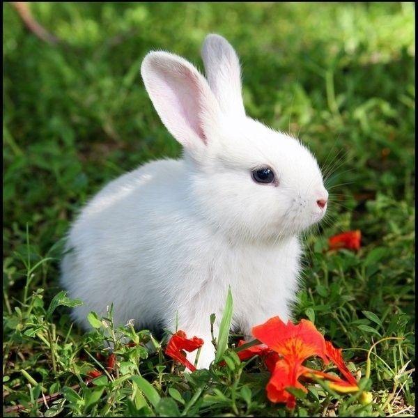 Le petit lapin centerblog - Le petit lapin s est cache dans le jardin ...