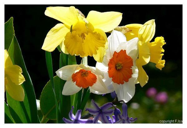 Poeme fleur for Images du printemps gratuites